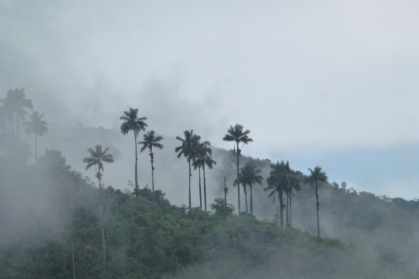 Palmen im Nebel