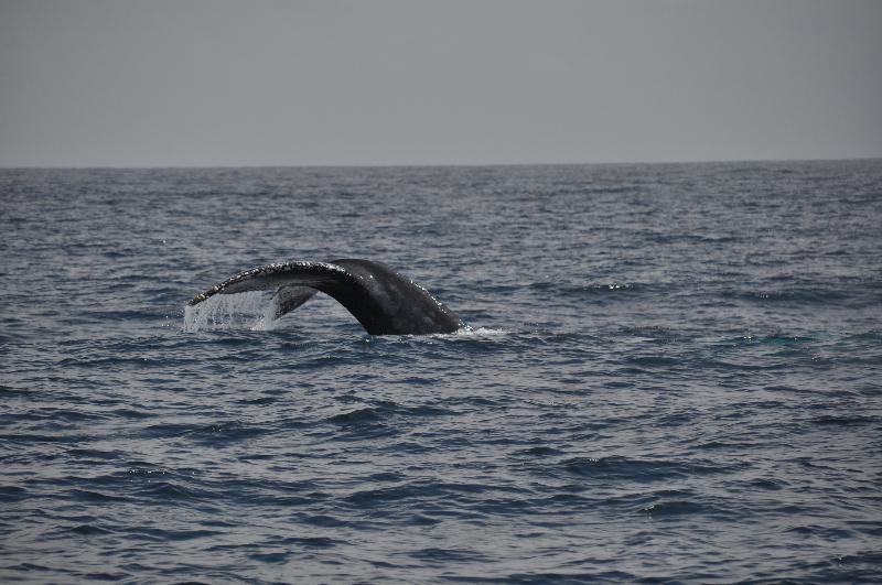 Walbeobachtung Ecuador