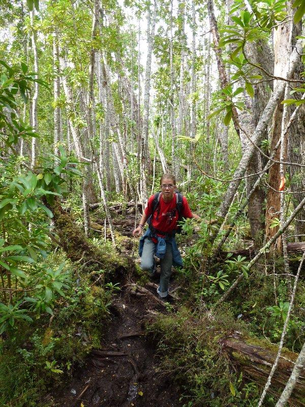 Urwald südlich von Punta Arenas