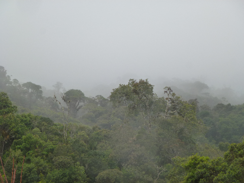 Kolumbien im Nebelpiss