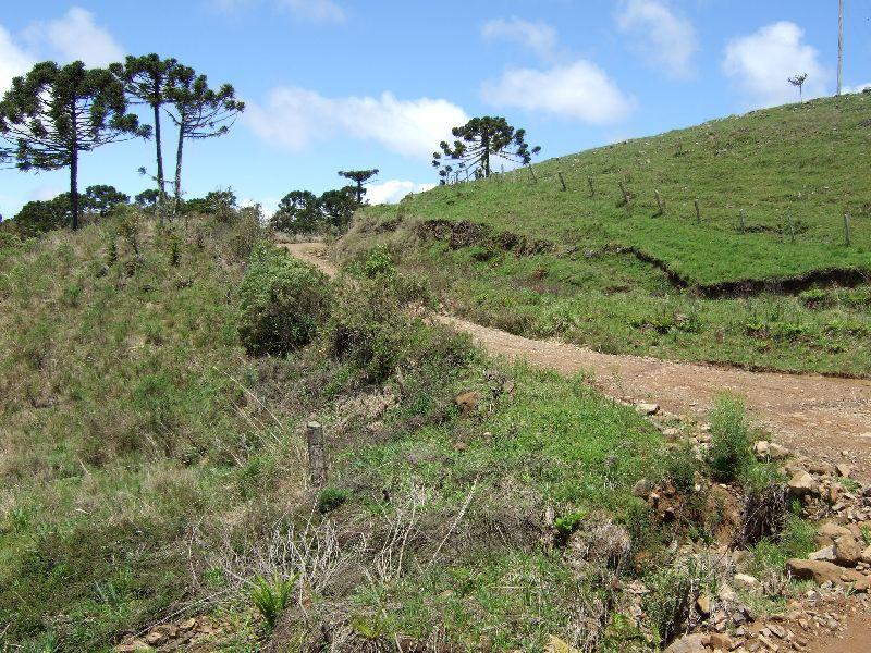 grüner Hügel