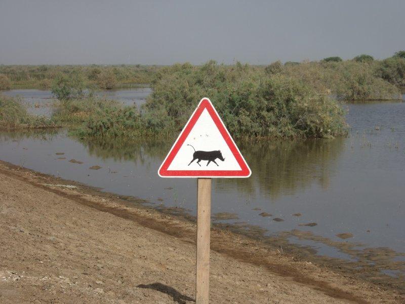Achtung Warzenschwein