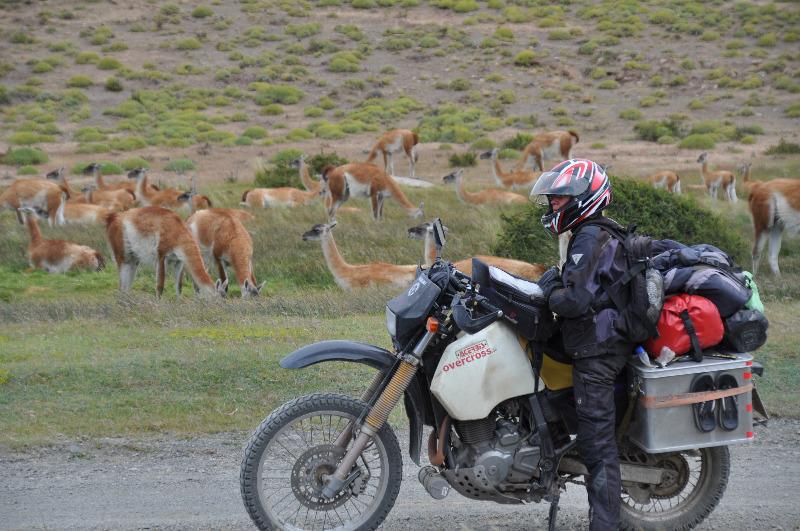 Motorrad vor Guanakos