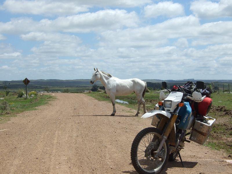 Pferd Contra Motorrad