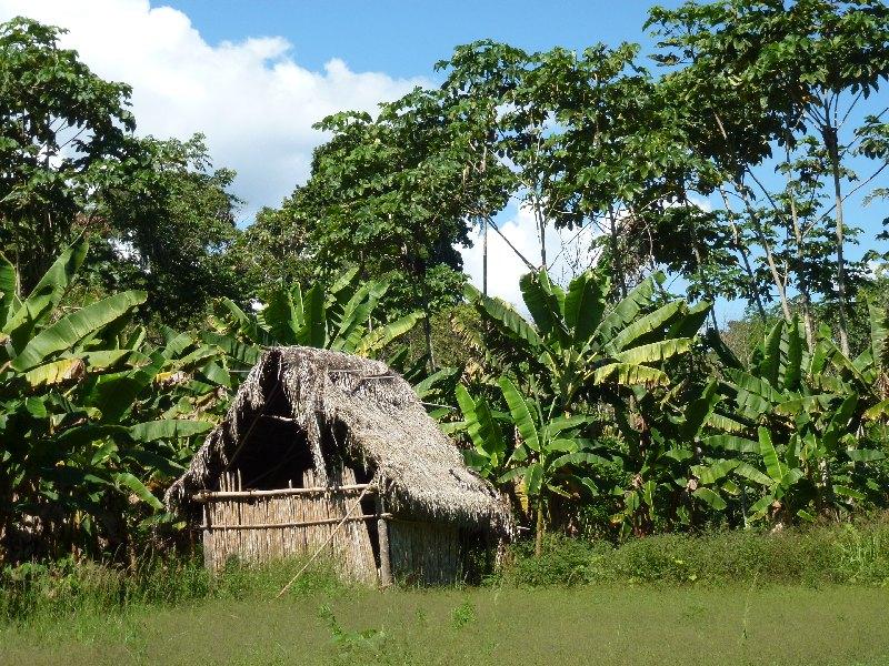 Dschungel-Hütte