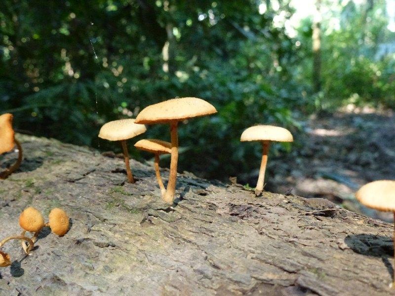 Pilze im Dschungel