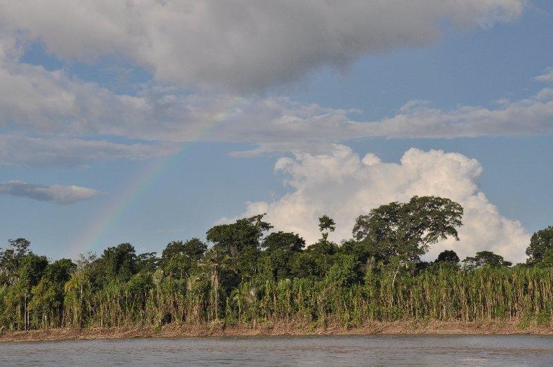 Regenbogen über Dschungel