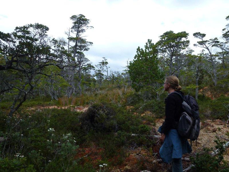 Wanderung durch Moos und Urwald