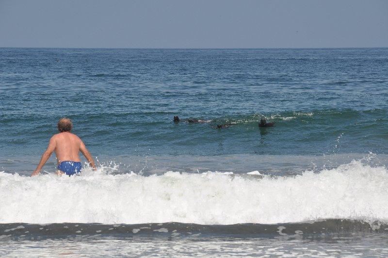 Baden mit Seehunden