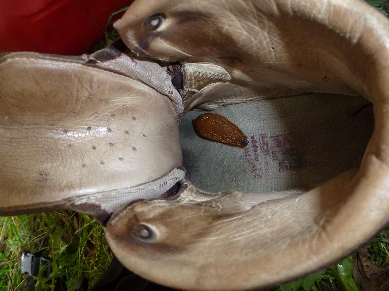 Schnecke im Schuh