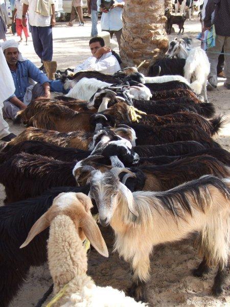 Ziegen auf dem markt
