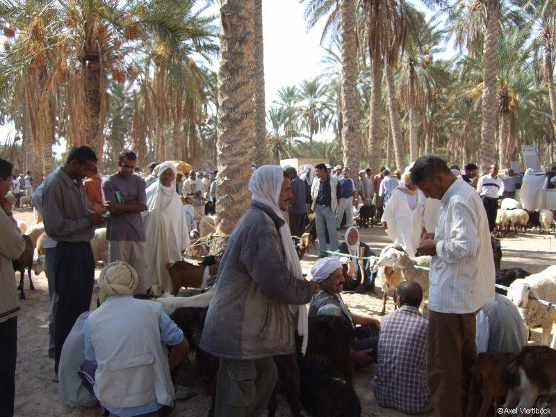 Kamelmarkt in Douz