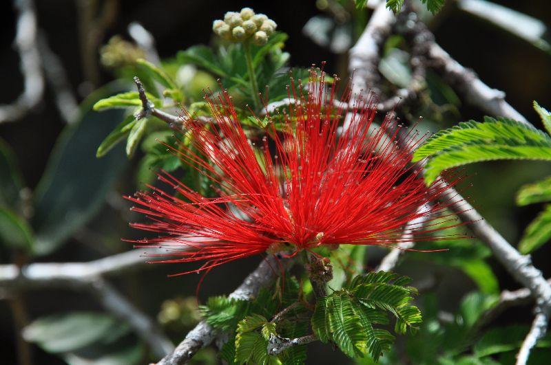 rotes Blüte